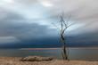 Zachód słońca na plaży w Sobieszewie, samotne drzewo, Polska