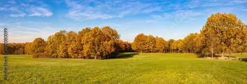 Valokuva  Panorama Herbstwald