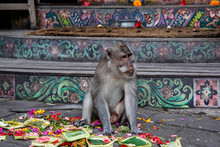 A Monkey Sits On The Ground Ne...