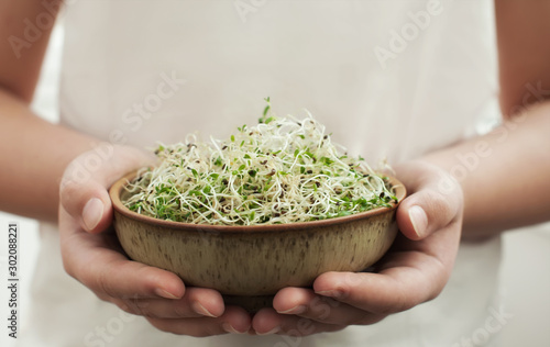 Fotografie, Obraz Microgreen or alfalfa sprouts in the bowl .
