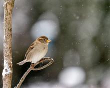 Closeup Of A Bird In Winter