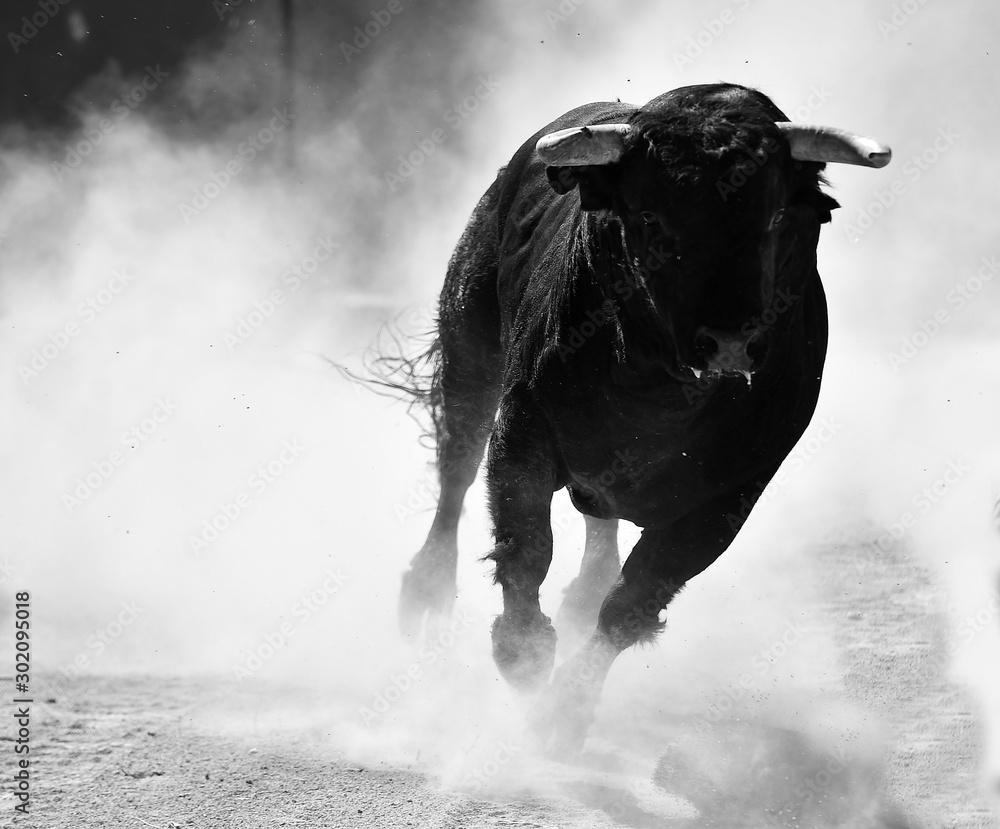 Fototapeta toro negro español con grandes cuernos
