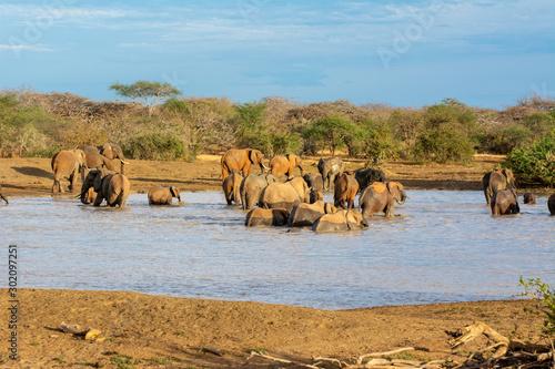 Obraz na plátně red elephants at a watering hole in kenya