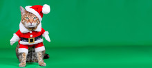 Christmas Banner - Bengal Cat Dressed Up In Santa Claus Costume On Green Background With Copy Space