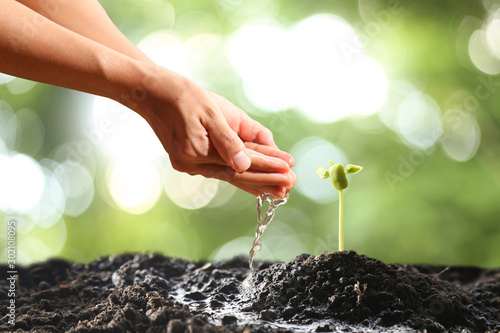 Obraz Farmer's hand watering a young plant on green bokeh nature - fototapety do salonu