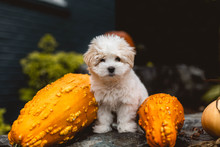 Dog On Rock With Gourds