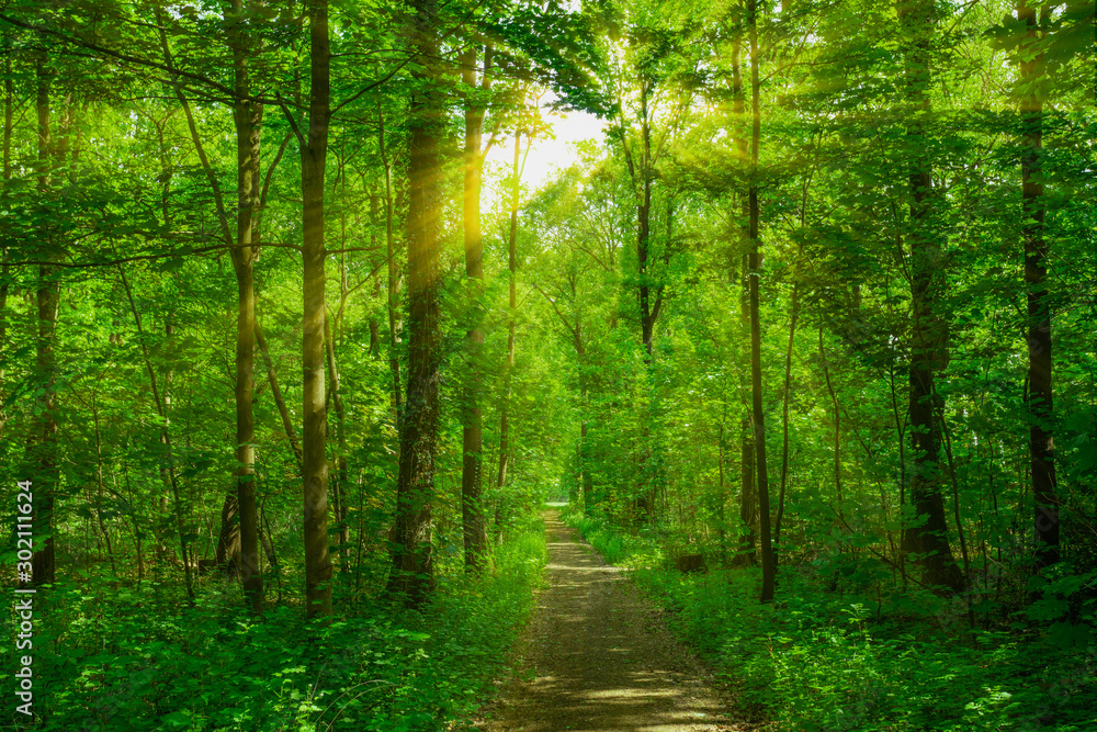 Fototapety, obrazy: Panorama of a beautiful forest at sunrise