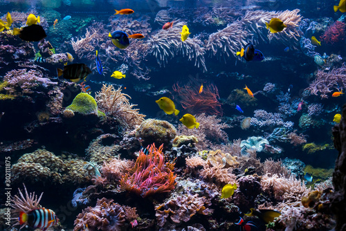 Valokuvatapetti Underwater Scene With Coral Reef And Tropical Fish