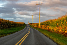 Golden Sun On A Country Road T...