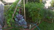Home Gardening - Wide Angle Vi...