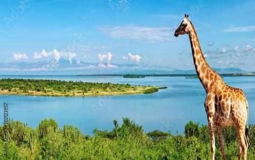 Autocollant pour porte Girafe photography of giraffe