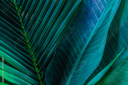 Fototapete - abstract green leaf texture, nature background, tropical leaf