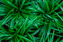 Abstract Green Leaf Textures O...