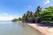 Trees and palms at the coast, Manzanillo, Cuba