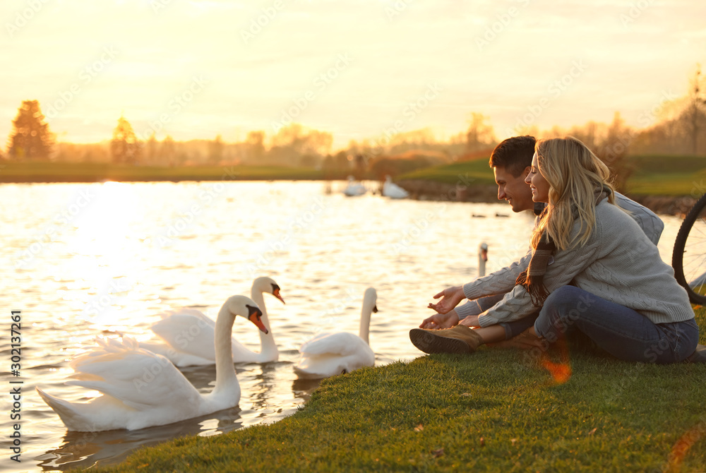 Fototapeta Young couple near lake with swans at sunset. Perfect place for picnic