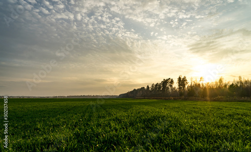 Foto auf AluDibond Wiesen / Sumpfe Evening landscape. Field and forest edge. Clouds and sunset.