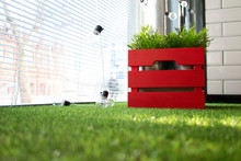 Interior Decoration Flower In A Red Box And Artificial Grass.