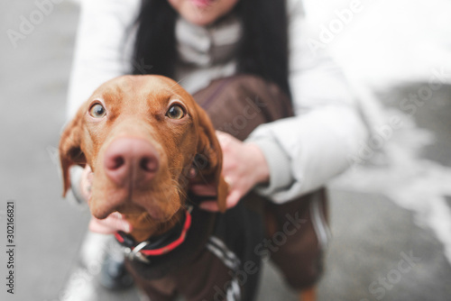 Leinwand Poster Close-up photo of a cute dog breeds a magyar vizsla, and a woman who holds a pet at the background