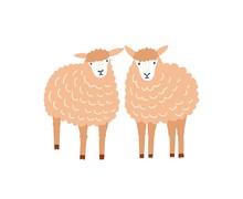 Two Cute Sheep Flat Vector Illustration. Adorable Woolly Lambs, Fluffy Domestic Animals Isolated On White Background. Ewe Breeding, Ovine Farm Livestock, Husbandry Decorative Design Element.