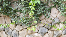 Stone Wall Coverd In Plants