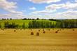 Leinwandbild Motiv Grain field after harvest in summer
