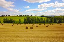 Grain Field After Harvest In Summer