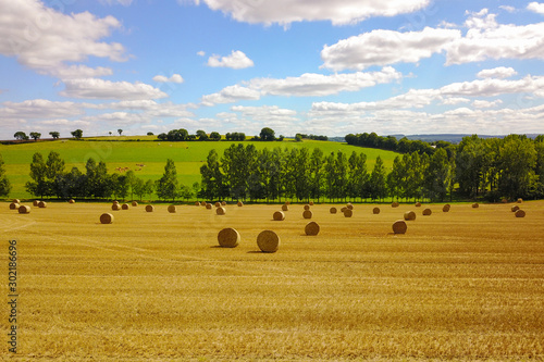 Foto op Aluminium Honing Grain field after harvest in summer