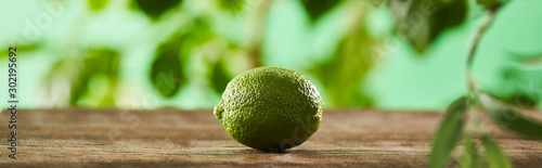 Fotografia, Obraz panoramic shot of fresh and whole lime on wooden surface