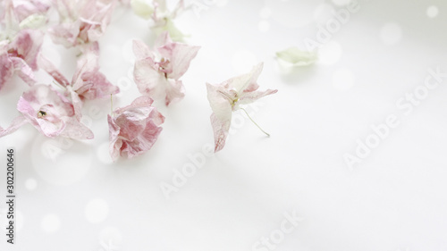 Fototapeta Beautiful floral background of dried orchid flowers in gentle pastel colors. Place for text, greeting card design. obraz