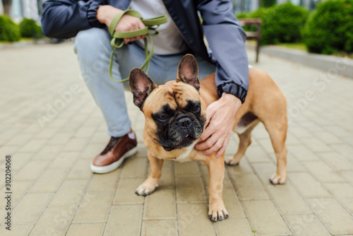 Fotomural  Cropped view of man petting french bulldog on sidewalk
