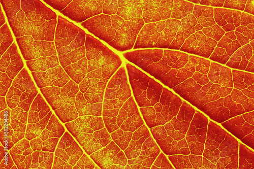 Obraz macro photo of autumn leaf texture - fototapety do salonu