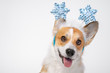 Close up portrait of funny cute red and white corgi wearing funny Christmas rim on the head, with shiny blue snowflakes.