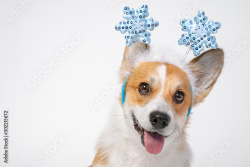 Fotografía  Close up portrait of funny cute red and white corgi wearing funny Christmas rim on the head, with shiny blue snowflakes