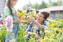 Mother And Daughter Picking Pretty Colourful Flowers In Their Organic Garden