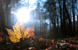 canvas print picture - Spätherbst - late autumn