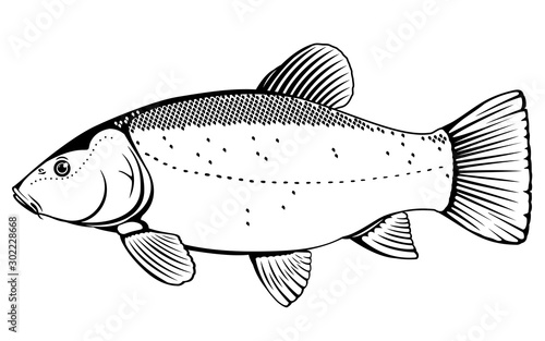 Realistic tench fish in black and white isolated illustration, one freshwater fi Canvas-taulu