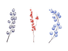 Hand Drawn Watercolor Winter Berries And Branches Set Isolated On White Background.