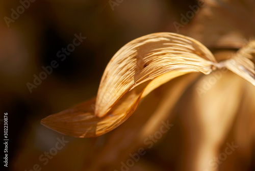 Brown Curved Leaf