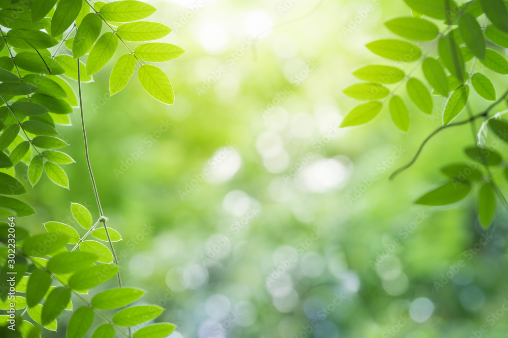 Fototapeta Green leaf for nature on blurred background with beautiful bokeh and copy space for text.
