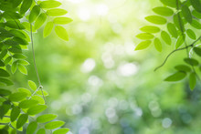 Green Leaf For Nature On Blurred Background With Beautiful Bokeh And Copy Space For Text.