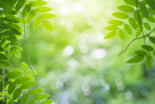 Foto auf Leinwand Frühling Green leaf for nature on blurred background with beautiful bokeh and copy space for text.