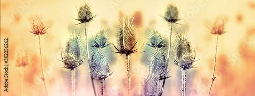 Fotografia Dry thistle - burdock in meadow lit by sunlight