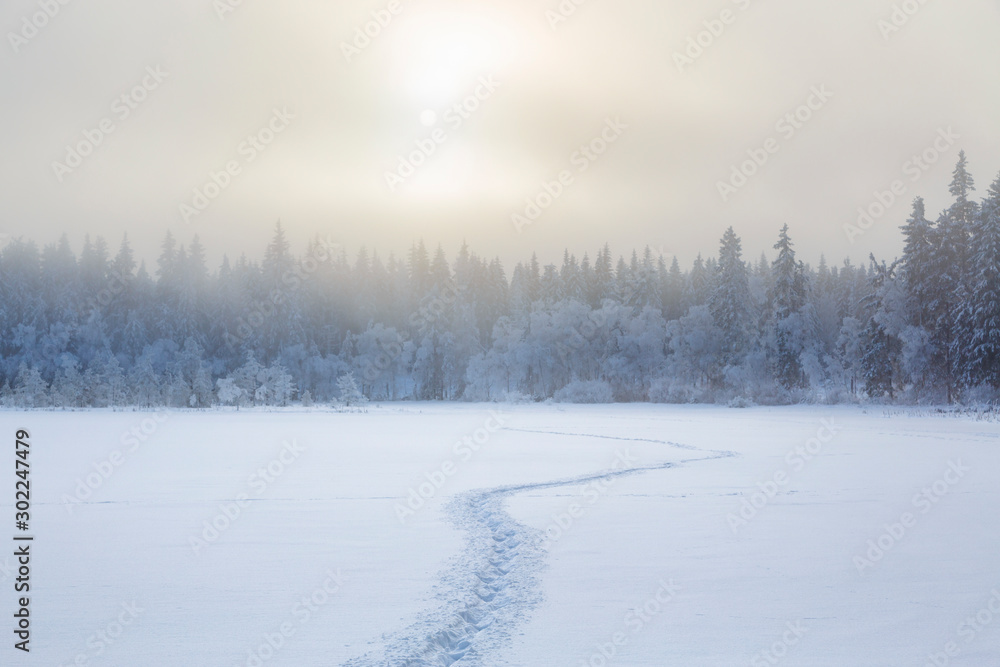 Fototapety, obrazy: Footprints in the snow to the forest in a cold winter landscape