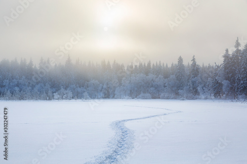 Obraz Footprints in the snow to the forest in a cold winter landscape - fototapety do salonu