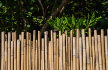 Dry Bamboo Fence With A Green Tropical Trees On Background. Eco Natural Background Concept.
