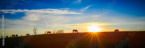 Thoroughbred Horses Silhouette by the Setting Sun Wallpaper Mural