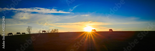 Thoroughbred Horses Silhouette by the Setting Sun Canvas Print