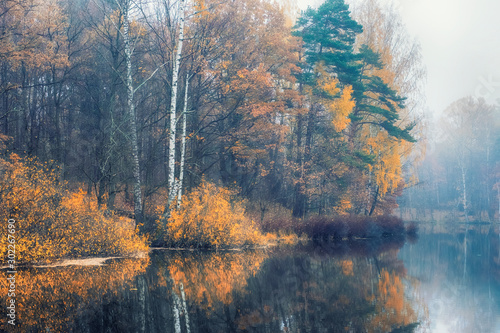 Fototapety, obrazy: autumn forest by the lake in a foggy haze