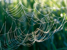 Spider Web In The Morning Dew,...