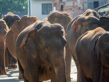 Elephants In The City
